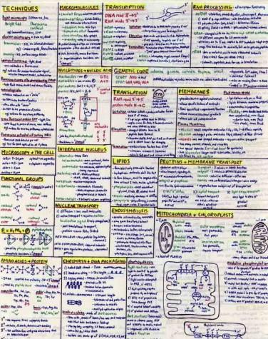 This is an example of how education is filled with memorization, since many science classes allow students to write formulas down for the final.