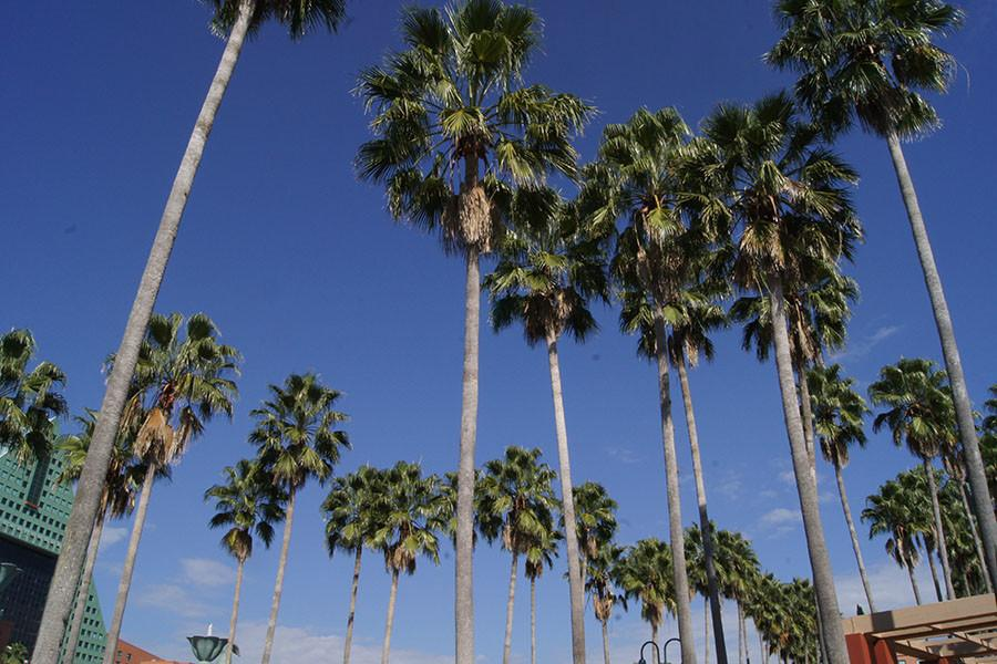 Wish we could see more palm trees in Illinois.