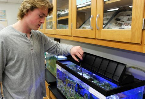 Fish tanks in Mrs. Kahn's room were previously used for a project to examine how different elements of an ecosystem affect each other.