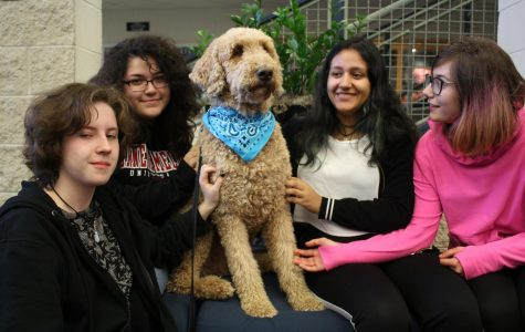 LHS close to bringing therapy dog to the school