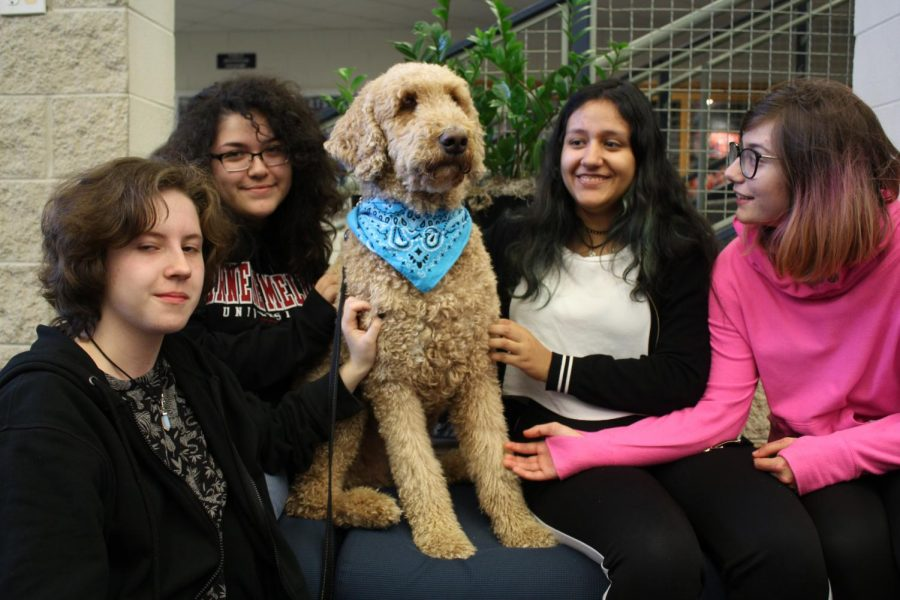 In the VHHS main entrance lobby, therapy dog Basil can be seen helping relieve students' stress throughout the semester. Basil can provide a sense of comfort, especially during stressful periods for students.