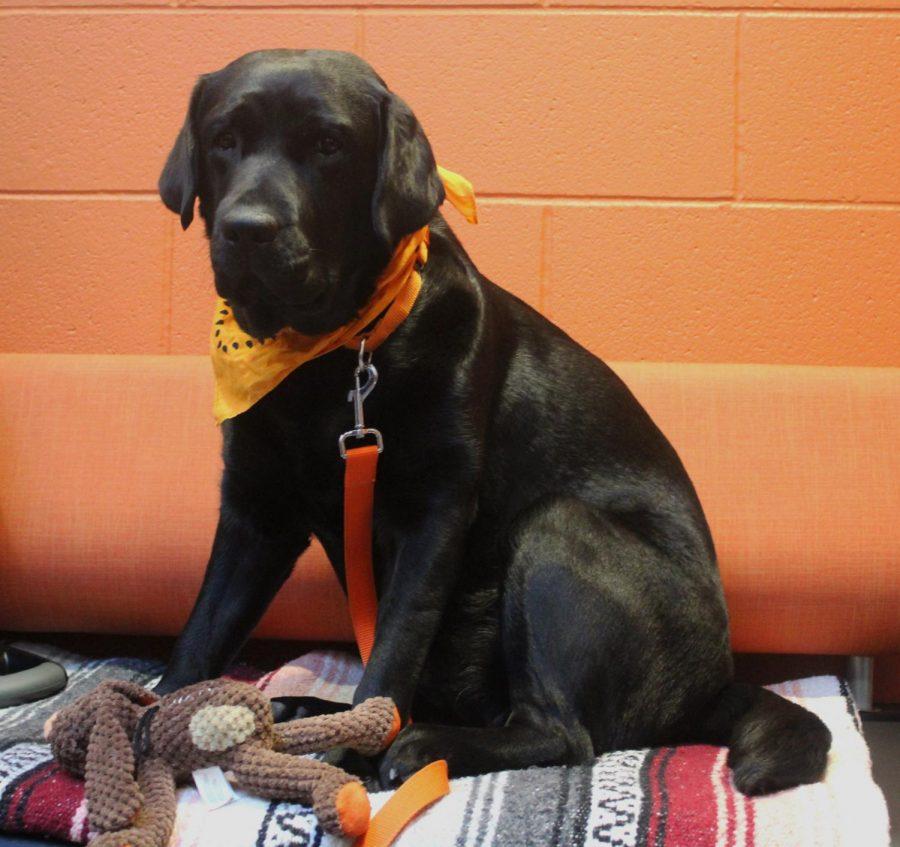 Meet Wrigley: LHS's furriest staff member